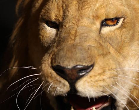 メカニカルマスク ライオン