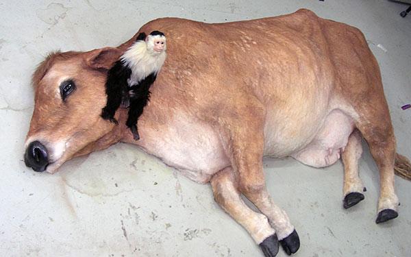 リアルな動物フィギュアが剥製を超える理由とは