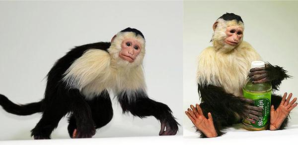 特殊造形の技術を使った動物のリアルフィギュア